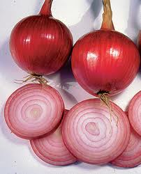 Onion Southport Red Globe