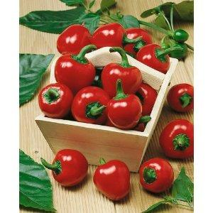 Pepper Large Red Cherry Hot