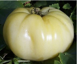 Tomato Great White