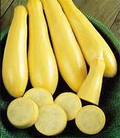Squash Prolific Yellow Straightneck